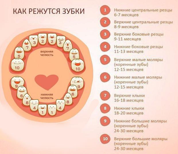 Нормы количества зубов до года и после