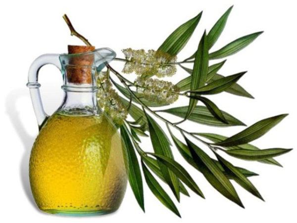 Масло чайного дерева губительно воздействует на патогенную микрофлору